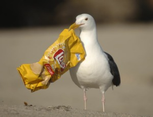 seagull-700381