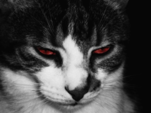 devil__s_cat_by_1sk-d2ygeeu